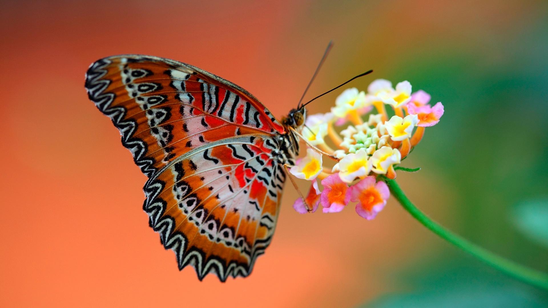 Lélek – pillangók