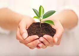 Szobanövények tavaszi gondozása