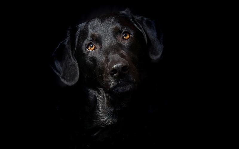 Mi áll a fekete kutya – effektus mögött?