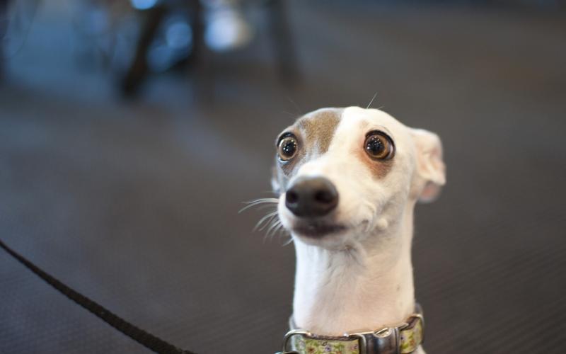 Kutyáink és az alapérzelmek