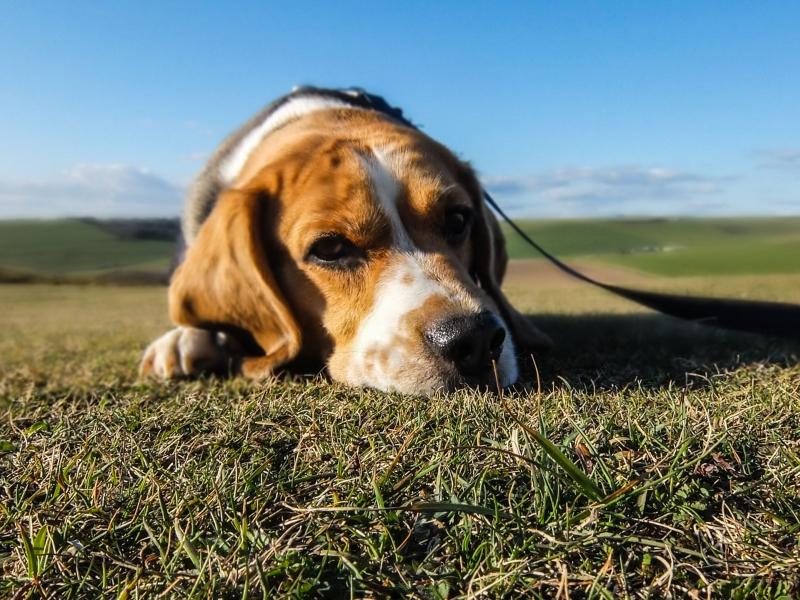 15 intő jel, mikor ideje meglátogatni az állatorvost