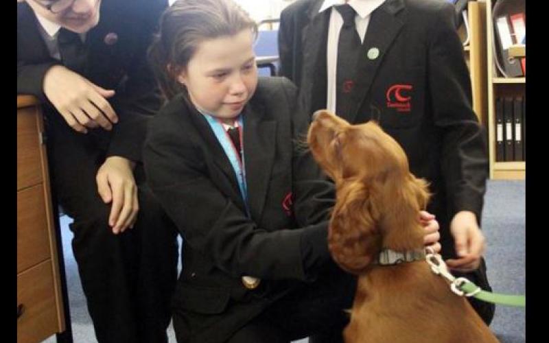 Az iskola örökbe fogadott egy kutyát, hogy oldja a stresszt a gyerekekben