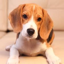 5 ok, amiért kutyád büdi lehet