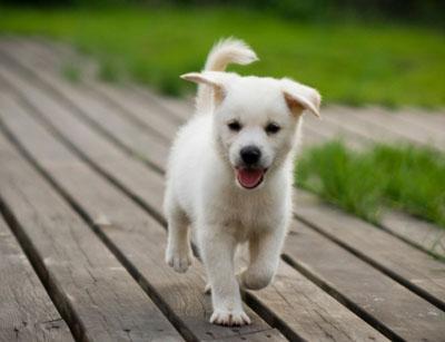 A karibi szigeten a turisták sétáltathatják a menhelyi kutyákat