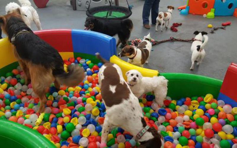 Észak-Írország gyöngyszeme: játszóház kutyáknak