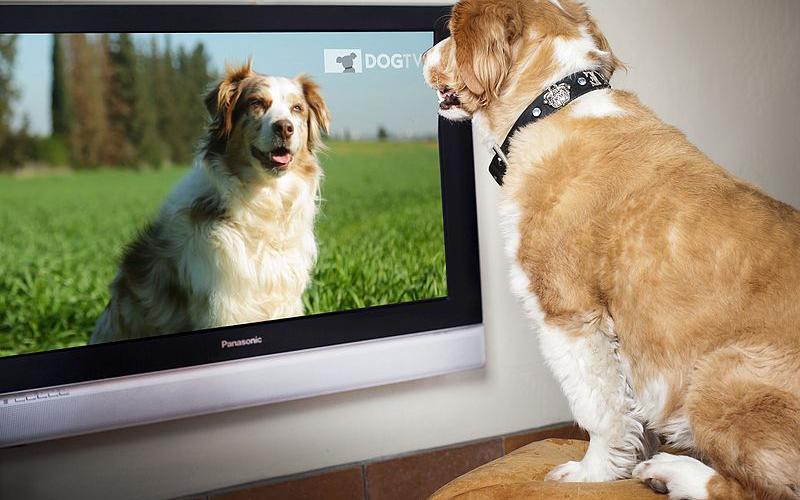 Mindenhol elérhető a kutyák számára készült tv csatorna