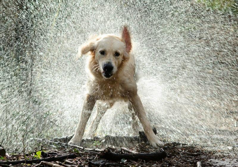Hőségriadó: házi kedvenceinket is hőguta fenyegeti – állatvédelem