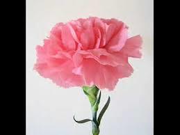 A virágok arra tanítanak… – zenei uniqum