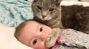 Bébik és cicák – nevess velünk! :)