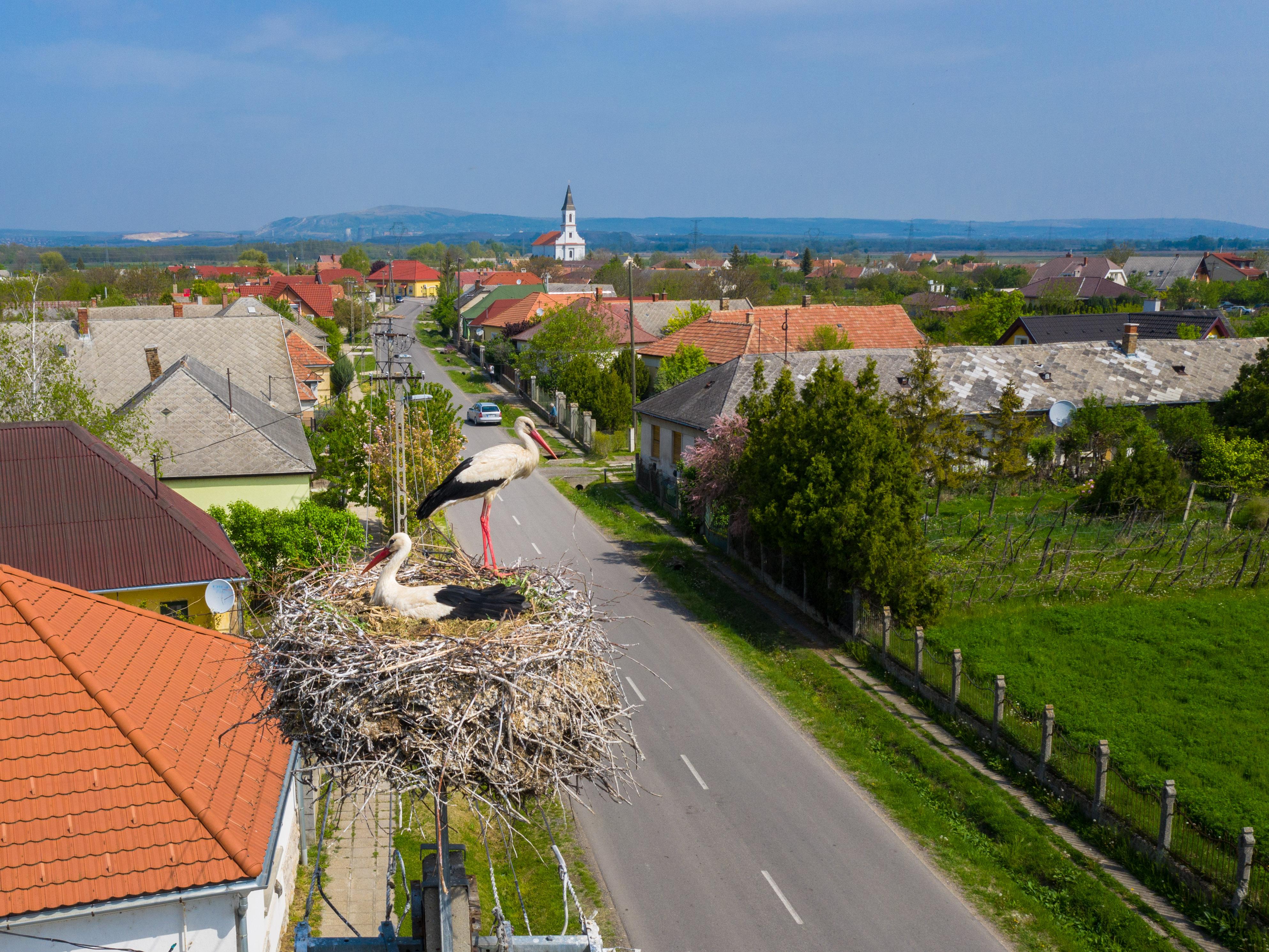 161 hely lett gólyabarát a Balaton-felvidéki Nemzeti Park Igazgatóság működési területén