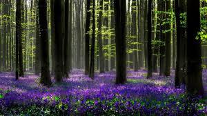 Amikor az erdőn jársz… – zenei uniqum