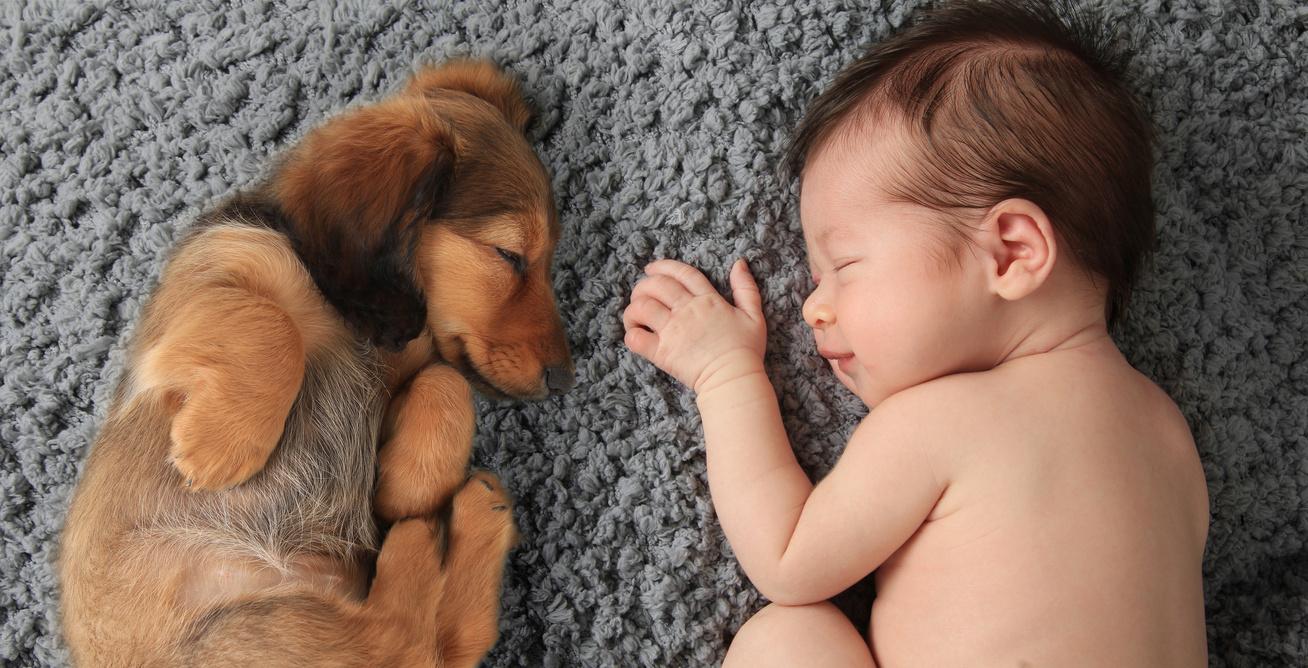 Kisbaba és kutya a lakásban?