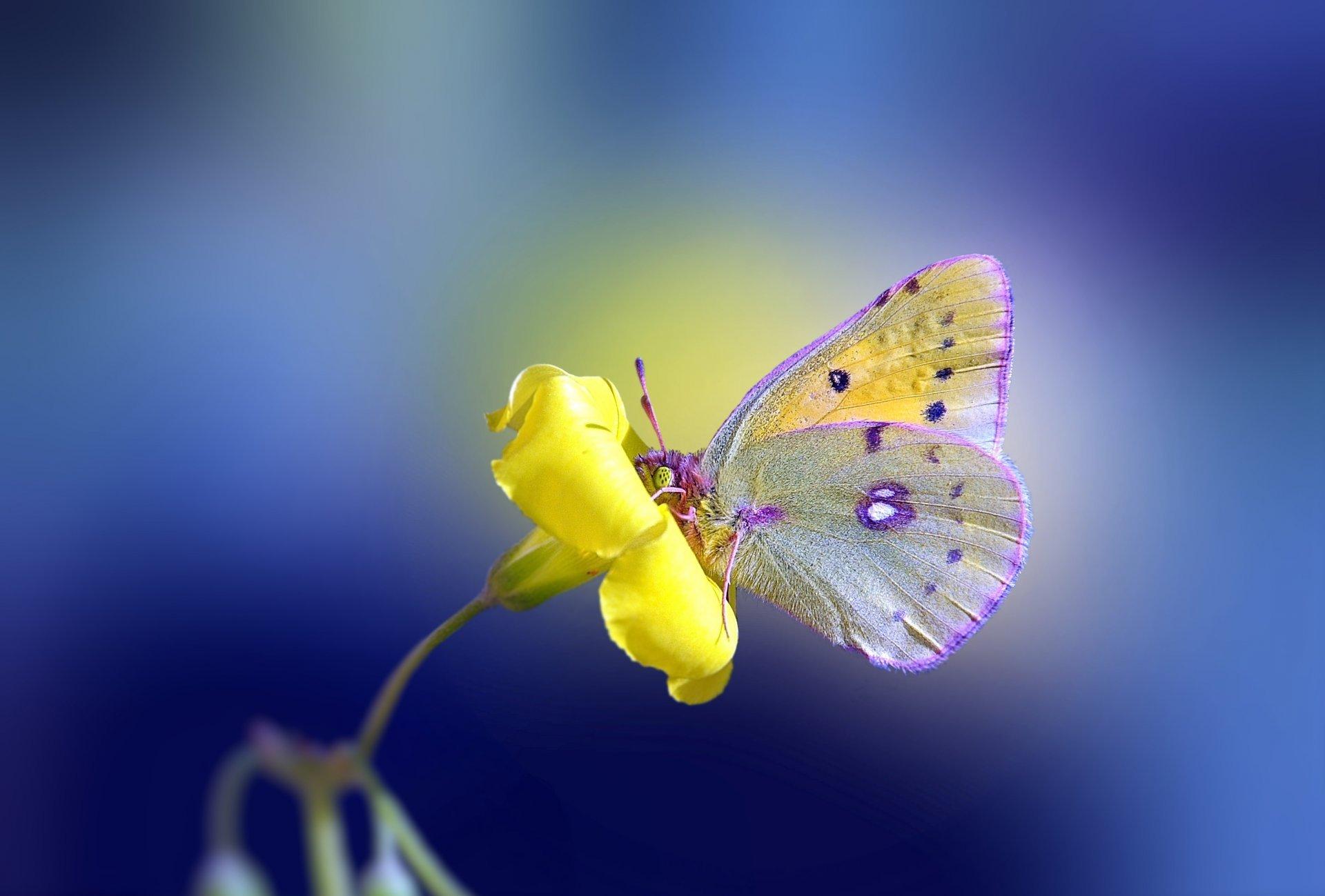 Pillangó-szavak