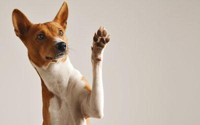 Élet egy kutya szemével – 1. rész