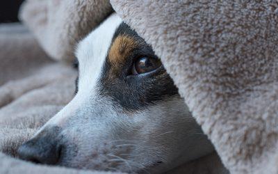 Új pirotechnológiai eljárás az állatbarátok számára: itt a kutyabarát csendes tűzijáték!