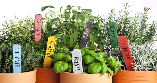 Gyógynövény- és fűszerkisokos: Melyik mire jó?