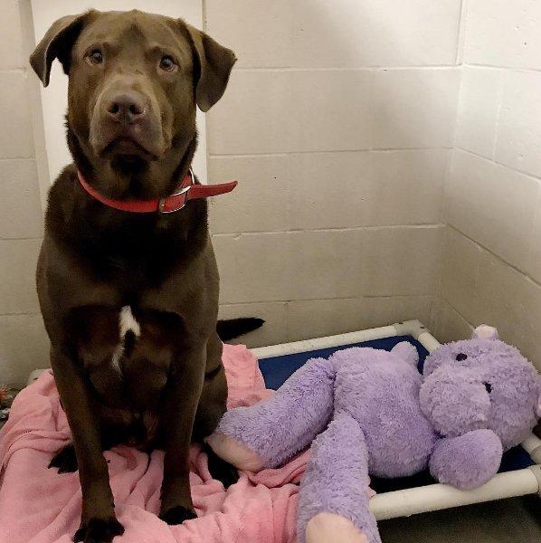 A menhelyi kutyát gyanúsítják barátja, a plüss hippó kibelezésével