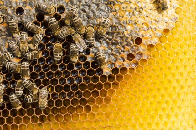 Április 30, a méhek napja