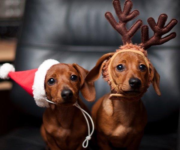 10 aranyos karácsonyi kutya