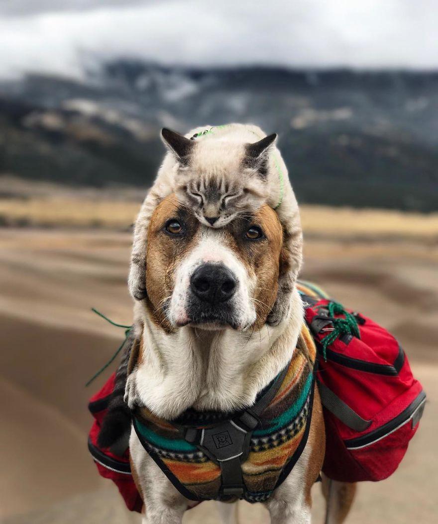 A túra imádó kutya és macska a legédesebb pár