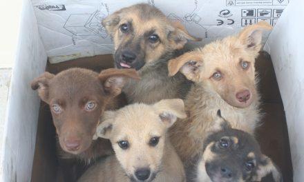 Felelős állattartás: fontos lenne az ivartalanítás