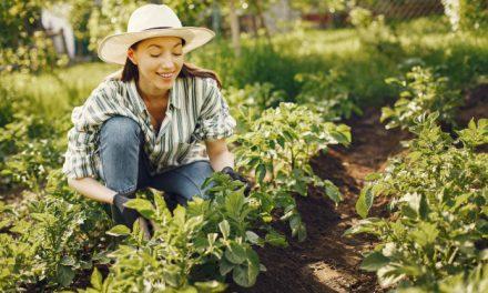 Derékkímélő kerti tippek